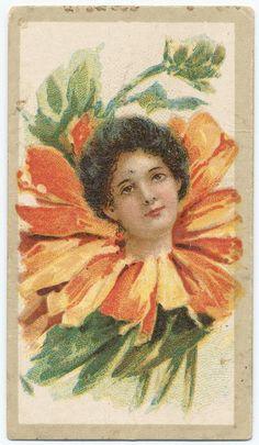 Beauties - Flower Girls ~ British American Tobacco Co. British American Tobacco, Library Services, New York Public Library, Vintage Ephemera, Vintage Advertisements, Flower Children, Flower Girls, Daisy, Digital