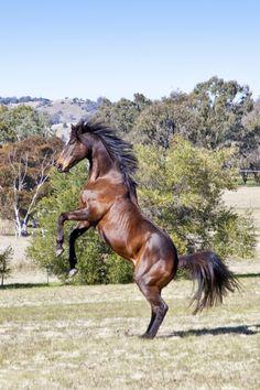 My first horse, Dan.  Copyright: Kristy Weik