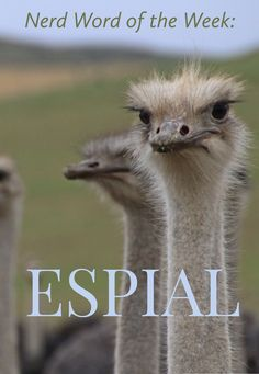 Nerd Word of the Week: Espial ~ the action of watching or catching sight of something. As in: Masters of espial, the ostriches stood ever-alert. Words For Writers, The Ostrich, Ostriches, Masters, Nerd, Action, French, Master's Degree, Group Action
