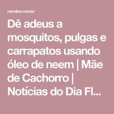 Dê adeus a mosquitos, pulgas e carrapatos usando óleo de neem | Mãe de Cachorro | Notícias do Dia Florianópolis