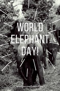 World Elephant Day, 12 August, aims to increase awareness regarding the plight of African and Asian elephants and to help protect them from the numerous threats that they face. Practice responsible tourism and avoid elephant rides, elephant painting and any other elephant activities that exploit these animals