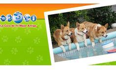 La casa de mi mejor amigo: http://www.melodijolola.com/casa-y-jardin-viajes/hotel-para-perros
