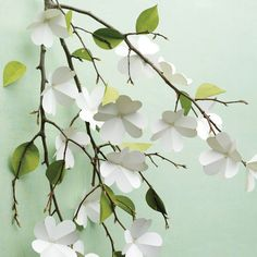 36 Paper Projects for All Ages Paper Dogwood Flowers Whether they're cut, folded, pasted, or printed, paper crafts are easy to make -- and fun! Here are some ideas guaranteed to inspire. Four-petaled paper dogwood flowers offer a way to enjoy spring Dogwood Flowers, Diy Flowers, Spring Flowers, Real Flowers, Origami Flowers, Flowers Vase, Flower Tree, Flower Branch, Flower Diy