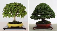 The cultivation and appreciation of bonsai trees or plants is on the rise, both in Japan and around the world. Here we introduce the aesthetic elements of this fascinating art that compresses nature without sacrificing its majesty and beauty.