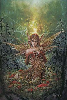 The Cobweb Fairy                                                                                                                                                                                 More