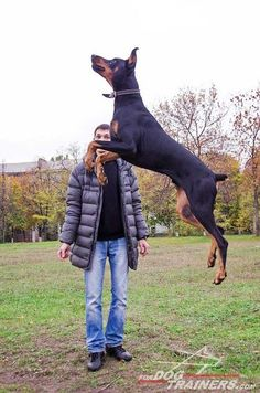 I believe, I can fly!...#Doberman