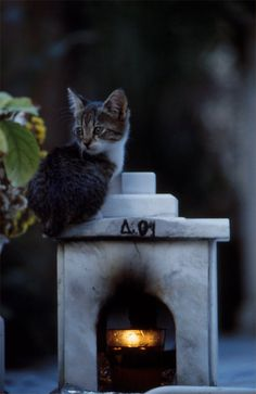 Kitten at the cemetery.