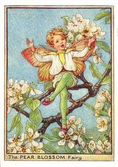 Gallery.ru / Фото #11 - 1_Flower Fairies - risau