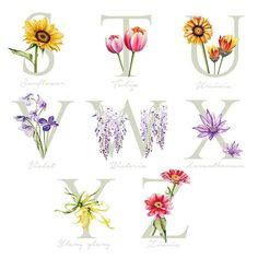 Counting down the final letters S to Z! Have a great weekend everyone 🌸🌺🌷🌹🌻 Alphabet Art, Animal Alphabet, Watercolor Bookmarks, Watercolor Art, Monogram Painting, Painted Monogram, Dachshund Art, Nature Journal, Letters And Numbers
