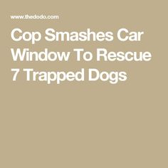 Cop Smashes Car Window To Rescue 7 Trapped Dogs