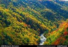 Blackwater River Virginia | ... and Blackwater River from Blackwater Falls State Park, West Virginia