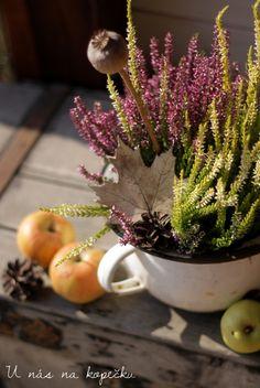 U nás na kopečku: Všechno září Relax, Autumn, Plants, Fall Season, Fall, Plant, Planets