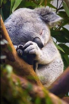 ef254aef3eeb 24 Best Koalas and Polar Bears images