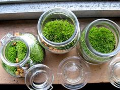 My Handmade life.  From Brooklyn to Hudson and everything in between. Moss Garden, Green Garden, Lawn And Garden, Irish Moss, Moss Terrarium, Peach Trees, Urban Farming, Glass Containers, Air Plants