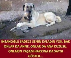 #ofline ... Anatolian Shepherd, Good Sentences, Animal Protection, Animal Projects, Pets, Cat Love, Labrador Retriever, Nature, Board