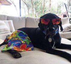 It's #sundayfunday and in this household we take that really serious. #dogsofinstagram #lab #blacklab #worldoflabs #blacklabsofinstagram #blacklabs #labpuppy #blackdog #labdad #laboftheday #koalacore #handsomedog #a_dogsworld #sendadogphoto #instagram #i