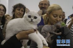 Cats competition and exhibit in Bucharest, published by Xinhua