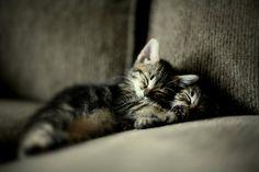 I love ketties. Cat lady 4 life.