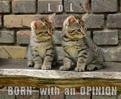 BORN with an OPINION http://cheezburger.com/9058461696