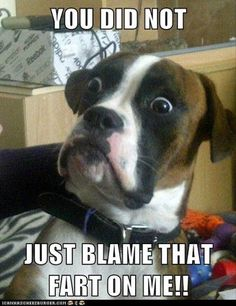 You did not just blame that fart on me!!!!