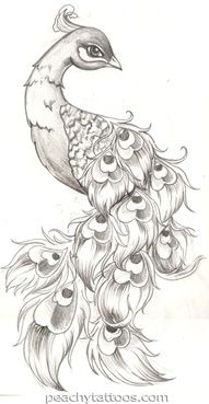 Peacock drawing for tattoo