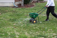 Lawn Repair, Types Of Grass, Lawn Care Tips, Soil Ph, Yard Care, Sandy Soil, Clay Soil, Grass Seed, Organic Matter