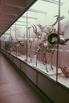 #cambridge #zoology #skeletons #bones #animals #science #museum