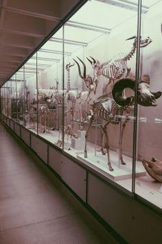 #cambridge #zoology #skeletons #bones #animals #science #museum