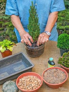 Create a tiny evergreen landscape by planting miniature conifer varieties in a container.