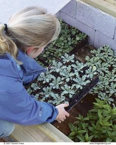 Instead of carrying plants in and out of the house every day, simply open and close the lid of the cold frame to acclimate plants to the out. Cold Frame Gardening, Fine Gardening, Container Gardening, Gardening Tips, Small Greenhouse, Greenhouse Gardening, Big Plants, Garden Projects, Garden Ideas