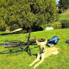 Sunny Day!!!! #txakur  #perro #animales #bicicleta #bicifixie #fixie #greenpeace #iceride #Madrid #madridalsol #semanasanta by txakur_enlaonda