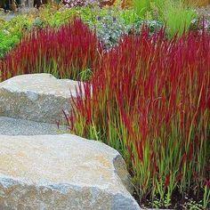 Beautiful Gardens, Japanese Garden Design, Rock Garden, Garden Water Fountains, Grasses Landscaping, Rock Garden Landscaping, Japanese Garden, Plants, Ornamental Grass Landscape