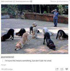 yoga downward facing dog position