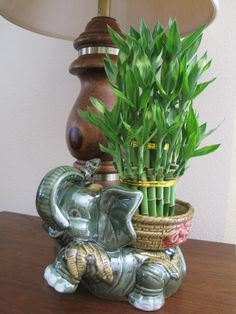 Lucky Bamboo Plant Jumbo Elephant Ceramic Vase with 3 Tier 4 6 8 Quality Feng Shui, Christmas Cactus Plant, Lucky Bamboo Plants, Unique Plants, Flower Pots, Flowers, Green Plants, Ceramic Vase, Gardens