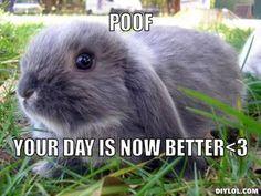 So true, bunnies make everything better.
