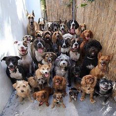 Dogs, dogs and more dogs!