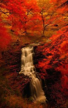 Autumn Falls <3