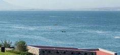 Whales Hermanus Walkerbay