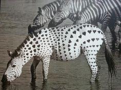 #funny #zebra