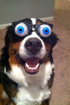 perro-gafas-ojos-saltones
