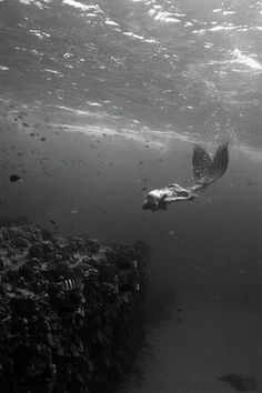 Mermaid ~~~~
