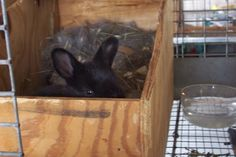 There are many types of rabbit nest boxes out there. Rabbit Nesting Box, Nesting Boxes, Rabbit Farm, Rabbit Colors, Nest Box, Milk Crates, Genetics, Rabbits, Buns