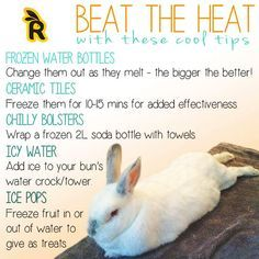 Summer Heat and Rabbit Production. I never give anything icy bc they may choke when it melts a bit though. Rabbit Diet, Rabbit Farm, House Rabbit, Diy Bunny Cage, Bunny Cages, Mini Rex Rabbit, Small Rabbit, Show Rabbits, Animaux
