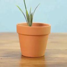 Flower Pot Art, Flower Pot Design, Flower Pot Crafts, Clay Pot Crafts, Paint Garden Pots, Painted Plant Pots, Painted Flower Pots, Decorated Flower Pots, Terracotta Flower Pots