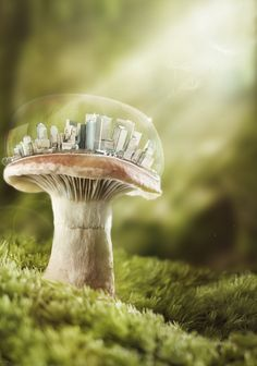 MushCity by Pagini on deviantART Mushroom House, Mushroom Art, Mushroom Fungi, Horton Hears A Who, Bokeh Background, Kawaii, Photo Manipulation, Surrealism, Fantasy Art