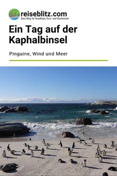 Ein Tag auf der Kaphalbinsel ist aus unserer Sicht ein absolutes Muss während eines Kapstadtaufenthalts. Warum, das liest du hier. Movies, Movie Posters, Travel, Cape Town, Round Trip, Travel Report, Island, Africa, Viajes