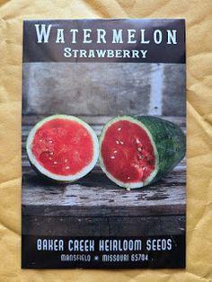 Reviewing Baker Creek Seeds: Strawberry Watermelon Watermelon Varieties, Preparing For Retirement, Zucchini Squash, Edible Plants, Garden Seeds, Wonderful Things, Gardening Tips, Strawberry, Dawn