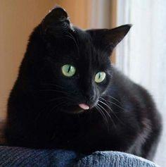 (^q^) Black kitty tongue! So cute.