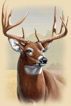 Deer drawing - Whitetail Deer Facts, Information, and Photos – Deer drawing Wildlife Paintings, Wildlife Art, Animal Paintings, Deer Paintings, Whitetail Deer Pictures, Deer Photos, Pictures Of Deer, Animal Sketches, Animal Drawings