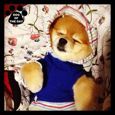 DOG OF THE DAY @weluvgucci Jun.01,2012